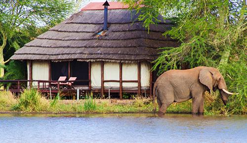 Oplev luksus i Kruger Nationalpark